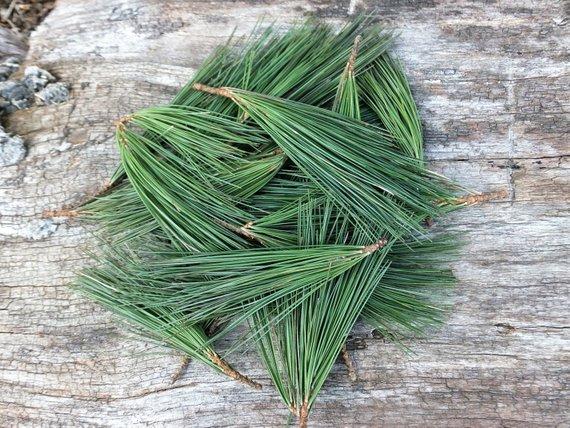 Lava chão natural feito com agulhas de pinheiro e alecrim