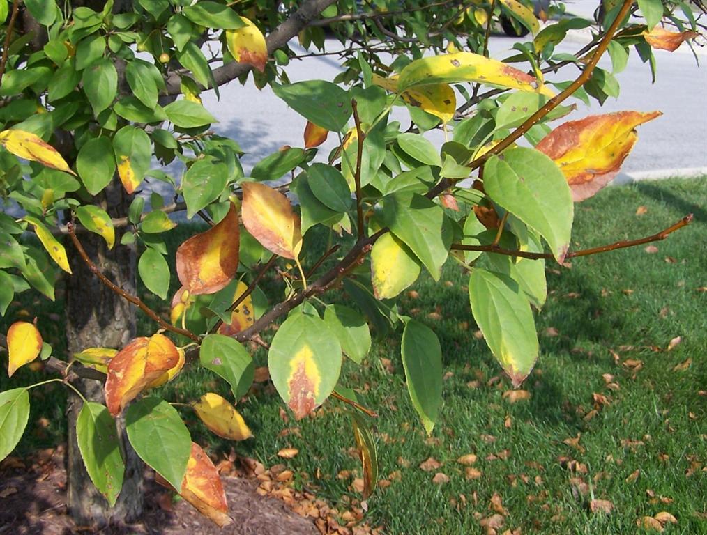 Aprenda a identificar as deficiências nutricionais das suas plantas!