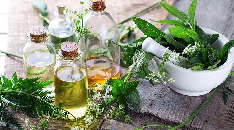 Aprenda a fazer óleo caseiro de folhas de sabugueiro