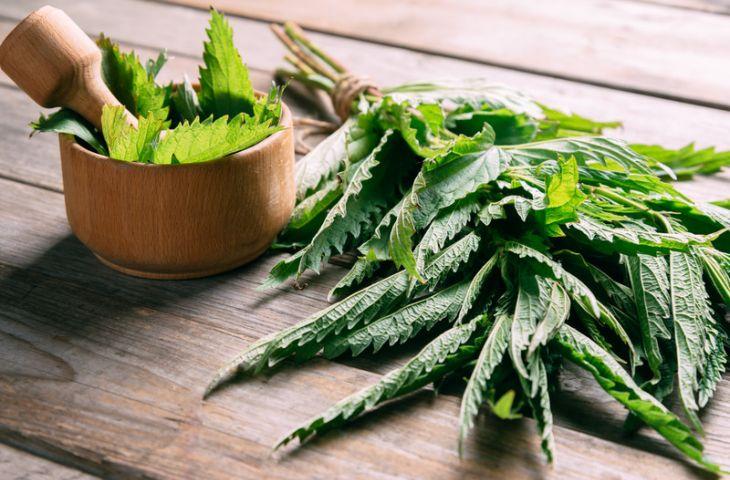 Combata as alergias com anti-histamínicos naturais!