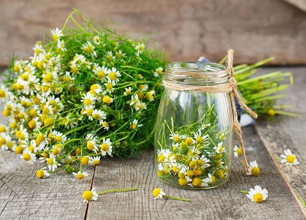 Anti-histamínicos naturais para combater as suas alergias