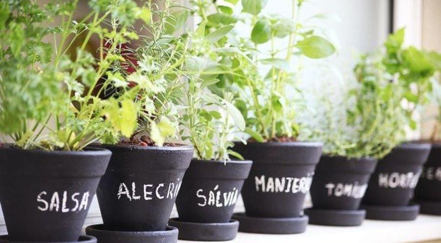 Aprenda a fazer uma horta de temperos para os seus cozinhados