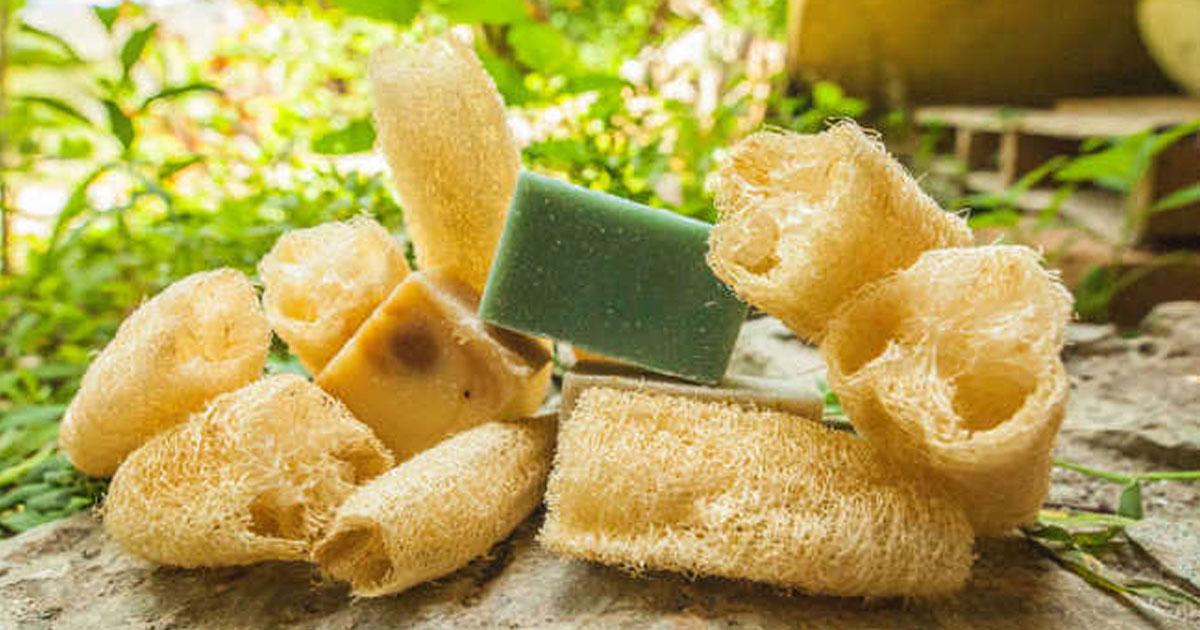 Vantagens da esponja vegetal X esponja sintética
