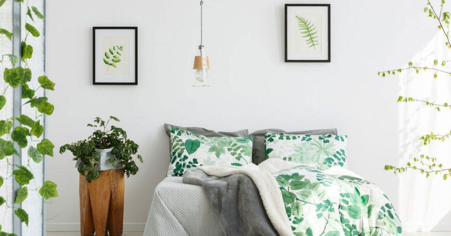 Plantas que deve ter no seu quarto e que o ajudam a dormir melhor