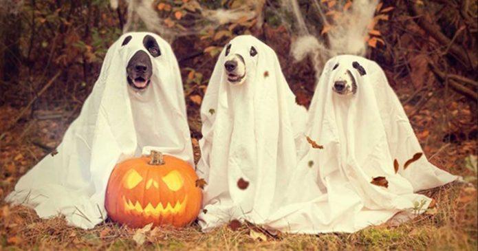 Tradição da Noite das Bruxas ou Halloween - venha o diabo e escolha!