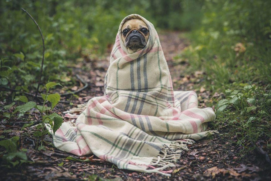Dicas para manter os seus animais quentinho neste inverno!