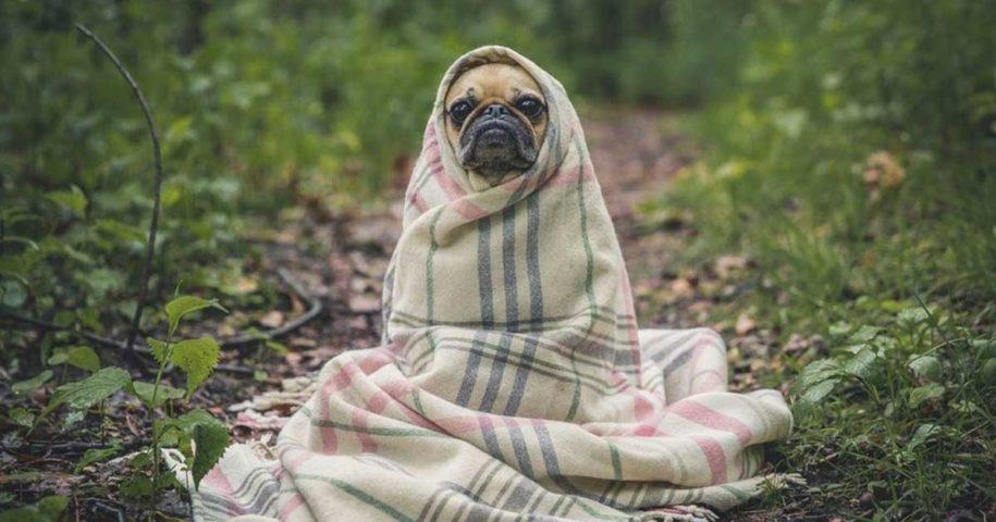 Dicas para manter os seus animais quentinhos neste inverno!