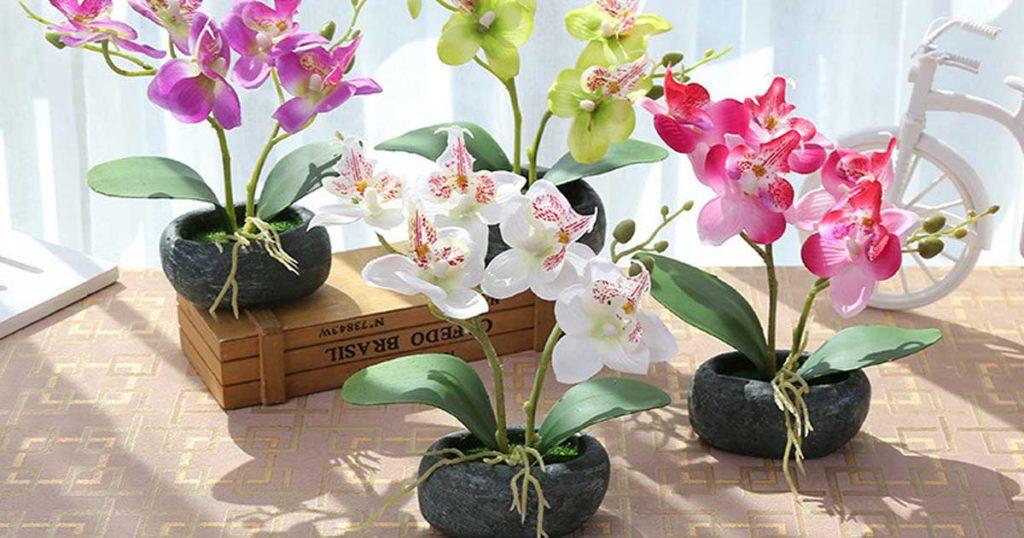 Querem saber 7 dicas para aprender a cuidar das vossas orquídeas?