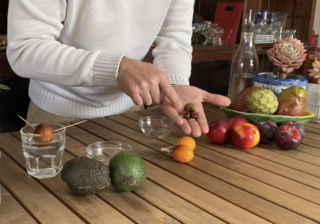 Aprendam a crescer árvores de fruto a partir dos caroços!