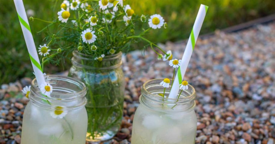Aprendam 3 formas para utilizarem a camomila do vosso jardim