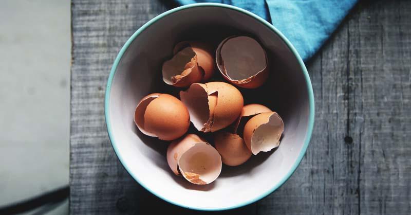 Fertilizante natural feito de cascas de ovos