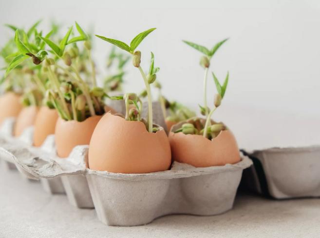 Benefícios das cascas de ovos no jardim e na horta