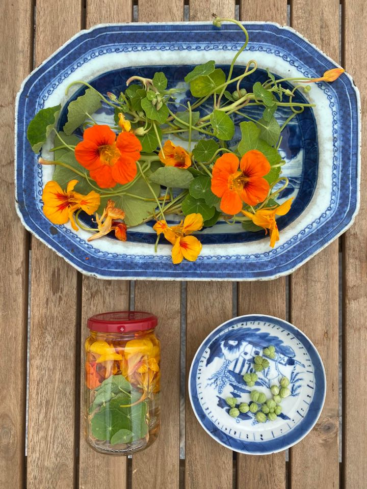 Receita de vinagre de flores e folhas de capuchinhas