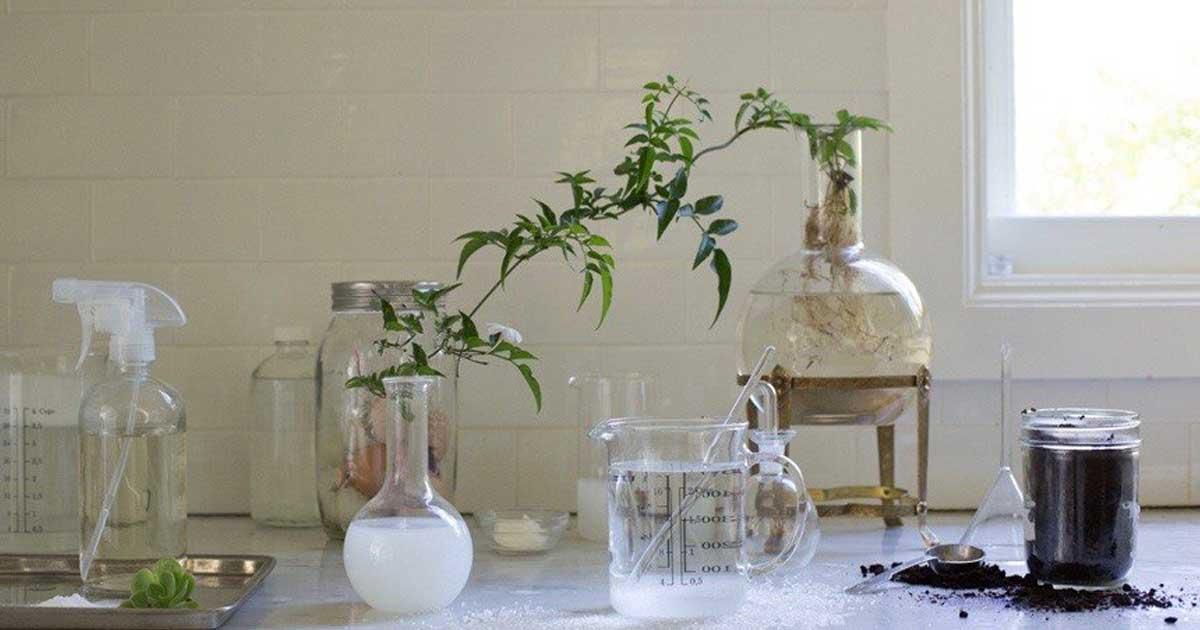 Resíduos de cozinha que podem ser úteis na sua horta