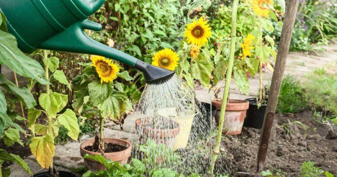 Dicas para proteger as plantas do calor em excesso