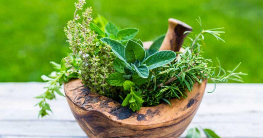 Como criar um jardim medicinal na varanda ou no quintal