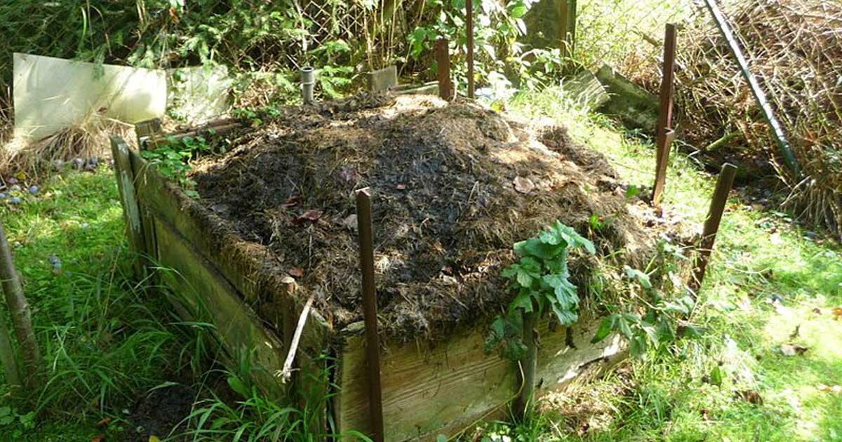 3 Utilidades do bicarbonato de sódio no jardim e na horta