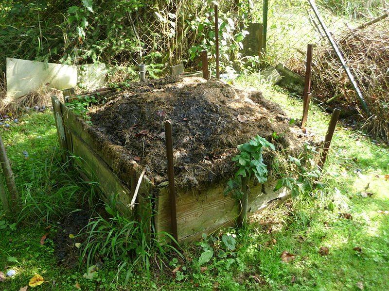 13 Utilidades do bicarbonato de sódio no jardim e na horta