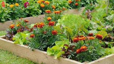 26 Plantas que deve plantar lado-a-lado
