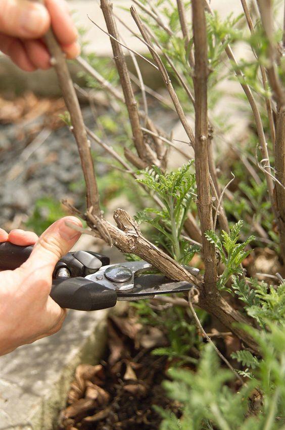 Sabia que pode e deve utilizar canela na sua horta / jardim?