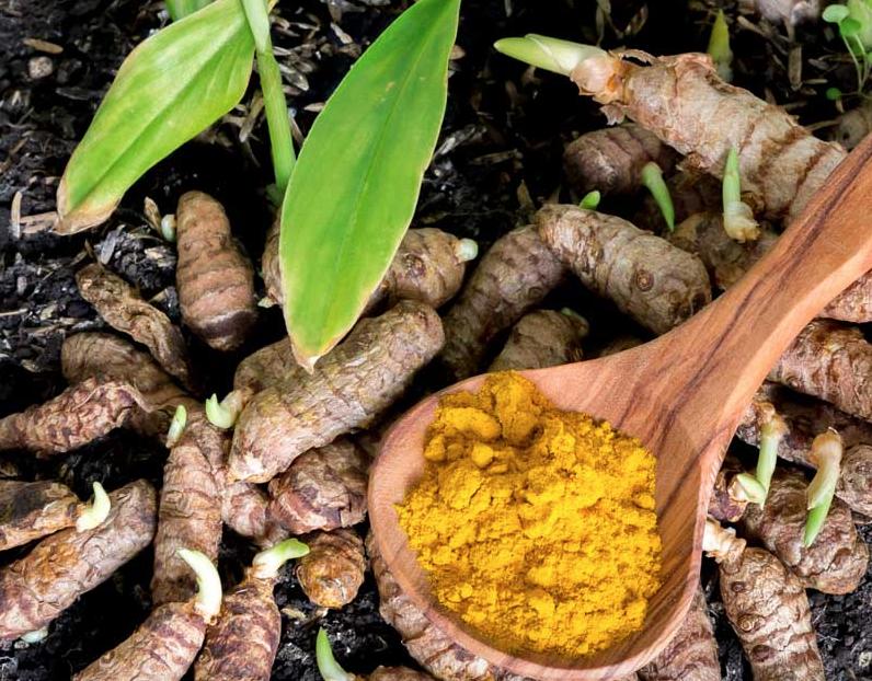 Sabia que é possível cultivar açafrão-da-terra em vasos?