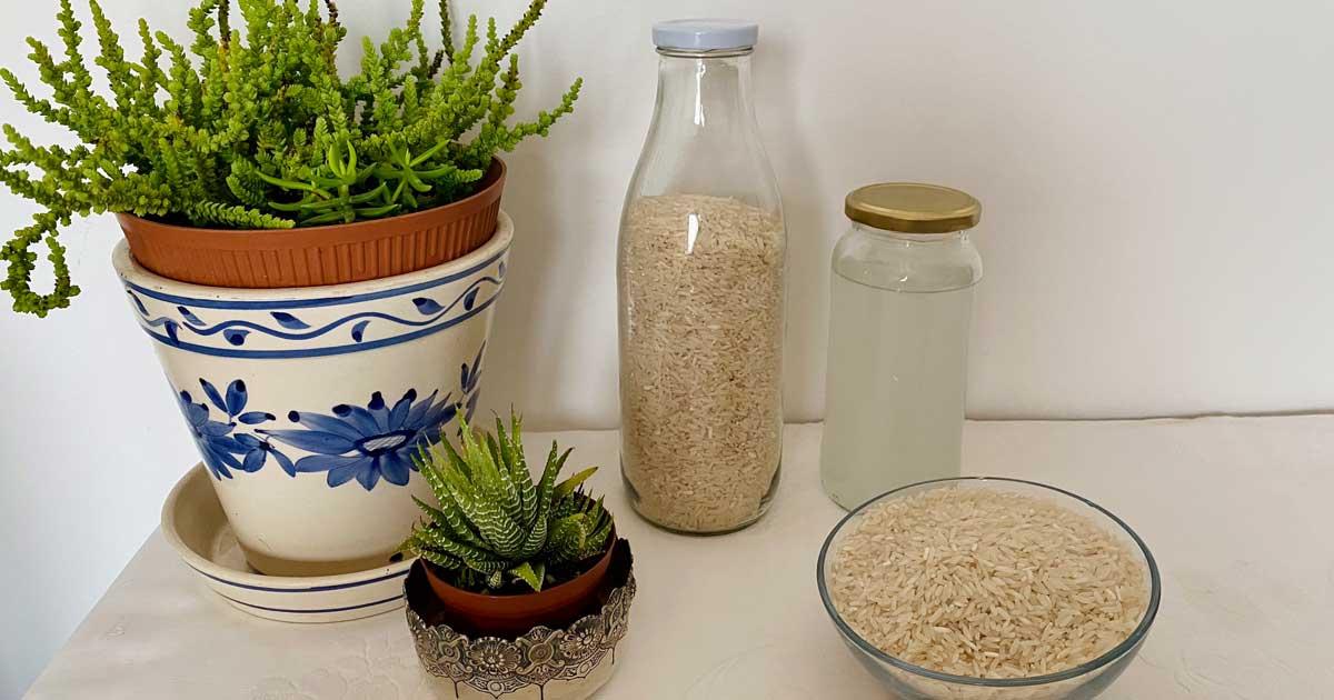 Aproveite a água de cozer arroz ou massa para fertilizar as suas plantas!