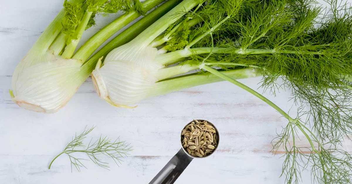 Sabe quais são os benefícios do funcho e das suas sementes?