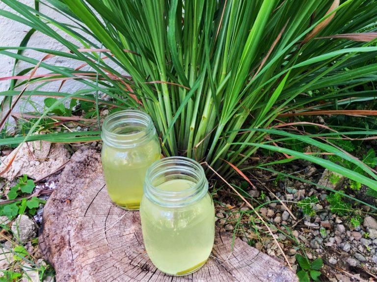Receita de chá de erva-príncipe e os seus benefícios