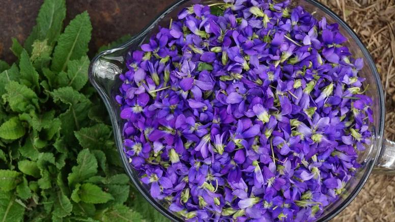 Aprenda a fazer uma geleia deliciosa feita com flores de violetas