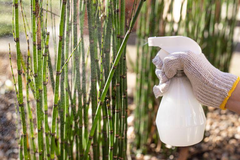 Extracto de cavalinha - fungicida para combater doenças nas plantas