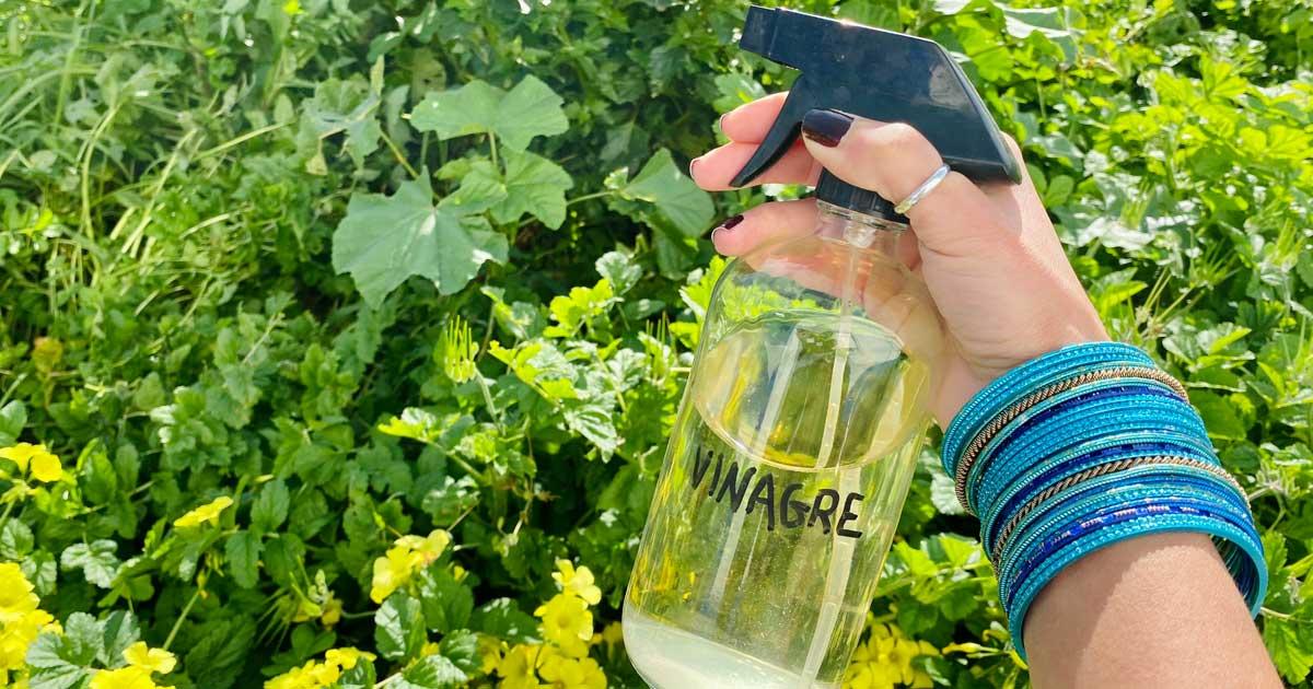 Utilidades extraordinárias do vinagre no jardim e na horta