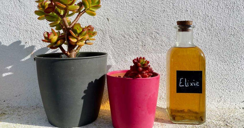 Aprenda a fazer um elixir bucal com ingredientes naturais