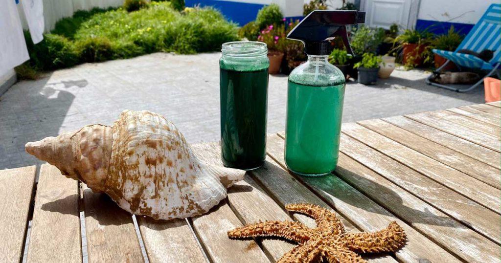 Como fazer fertilizante de algas apanhadas na praia