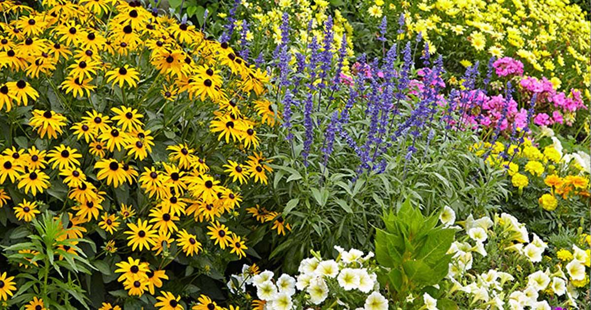 Como construir um jardim que atraia insectos polinizadores