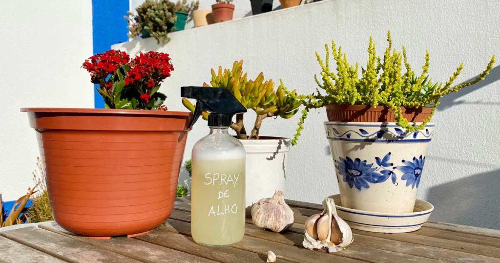 Spray de alho para combater pragas no jardim e na horta