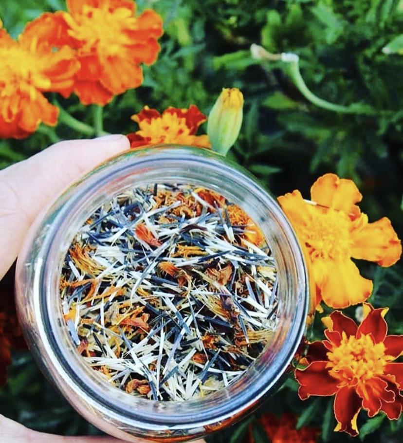 Aprenda a plantar cravos-túnicos - uma planta útil para a sua horta!