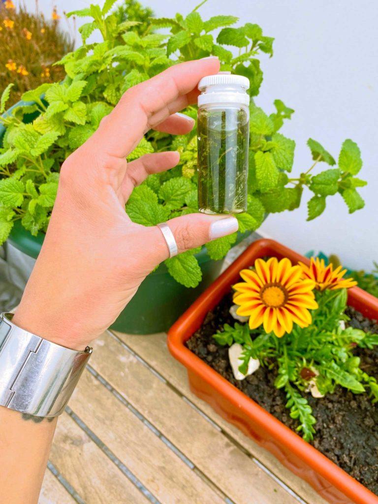 Aprenda a fazer óleo de erva cidreira para tratamentos naturais