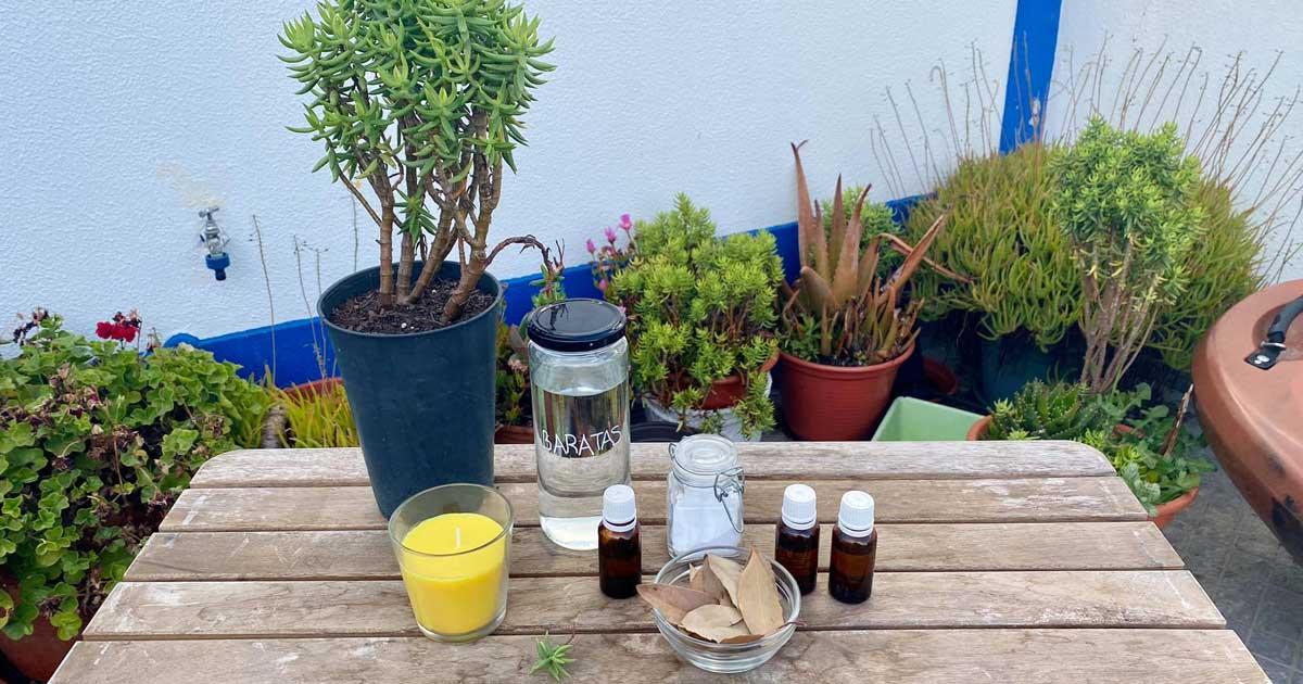 Repelentes naturais para combater as pragas de baratas