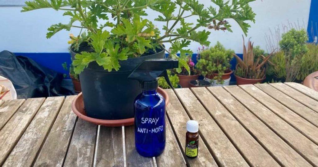 Spray anti-mofo e dicas para combater a humidade
