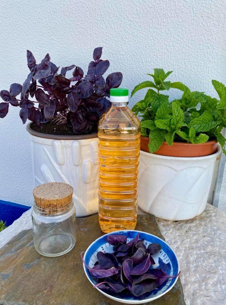 Aprenda a fazer um delicioso vinagre de manjericão roxo