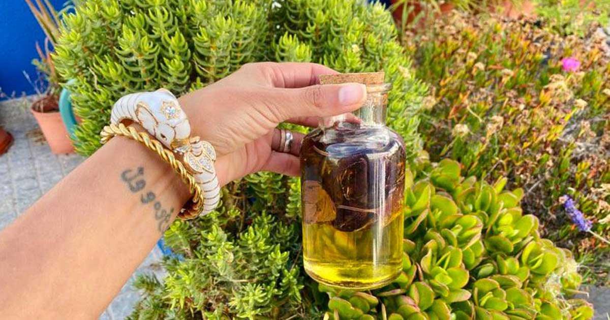 Aprenda a fazer azeite aromatizado de manjericão roxo