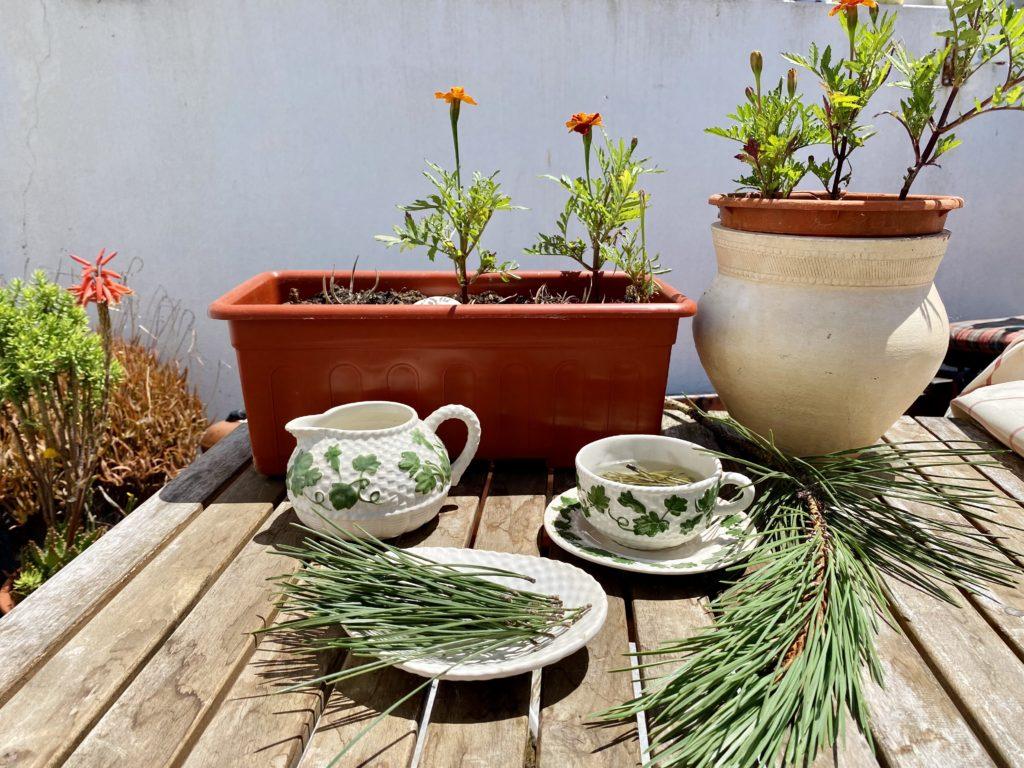 Sabia que o chá de agulhas de pinheiro é rico em vitamina C?