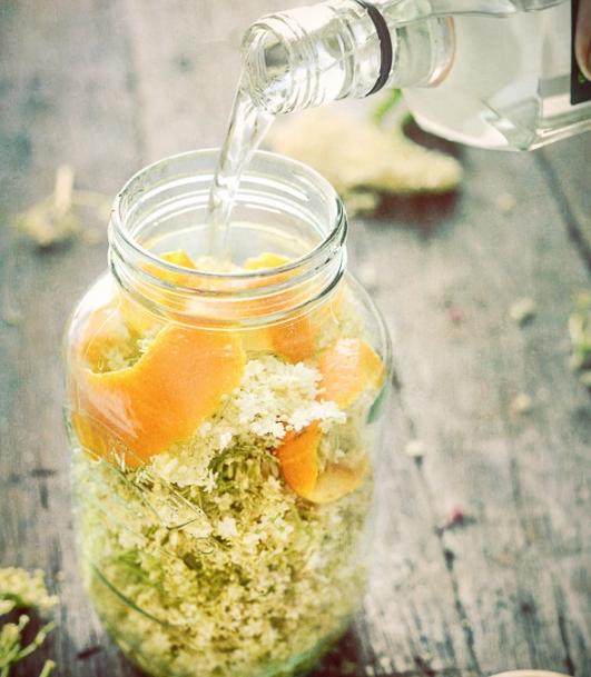 Aprenda a fazer vodka de flores de sabugueiro com citrinos
