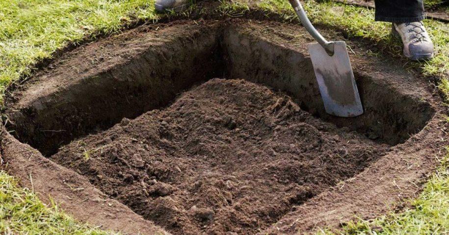 Plantar árvores em buracos quadrados é mais produtivo? Será?